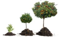 4 Steps To Tree Care You Need To Know
