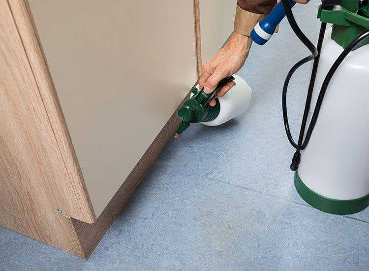 Prominent Reasons For The Necessity Of Pest Control Services